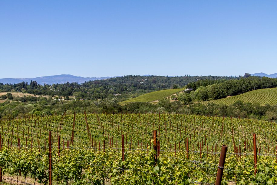 Vineyards in Russian River Valley in Spring, Sonoma County